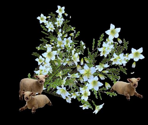 fleurs_paques_tiram_0