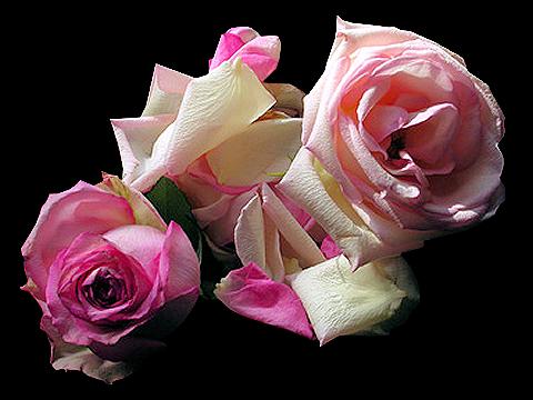 tubes_fleurs_saint_valentin_tiram_291