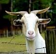 Goaty14's Avatar