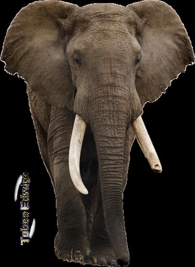 tubes_elephants_tiram_107