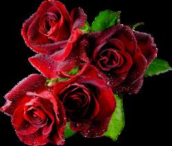 tubes_fleurs_saint_valentin_tiram_134