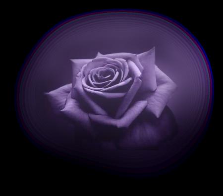 tubes_fleurs_tiram_913