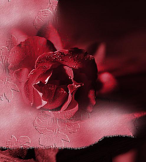 tubes_fleurs_tiram_538