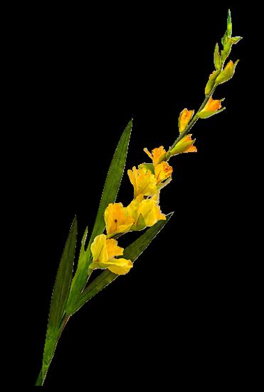 tubes_fleurs_tiram_229