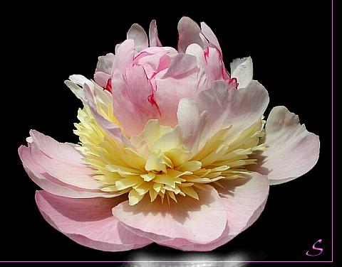 tubes_fleurs_tiram_783