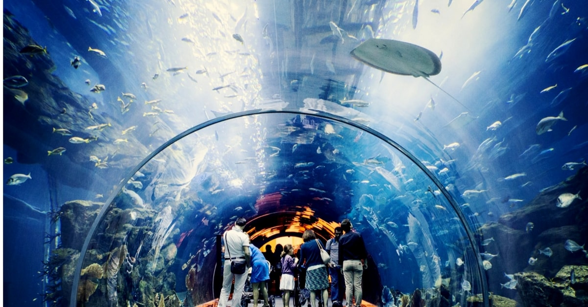 Dubai Mall Aquarium under water zoo