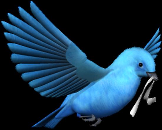 tubes_oiseaux_tiram_202