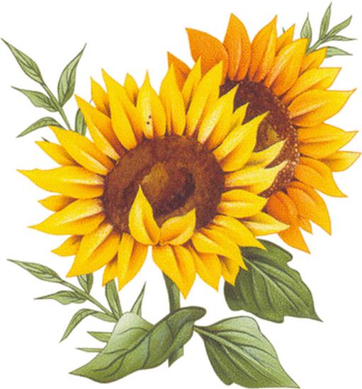 tubes_fleurs_tiram_527