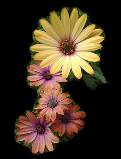 tubes_fleurs_tiram_469