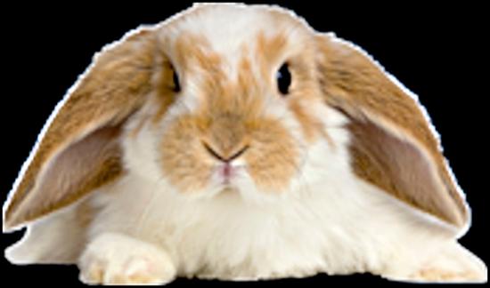 lapins_paques_tiram_333