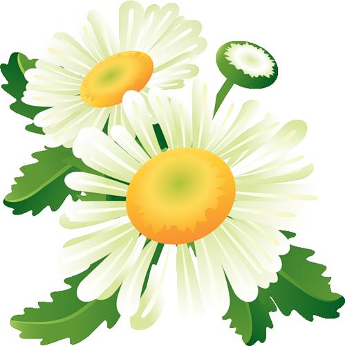 fleurs_paques_tiram_135