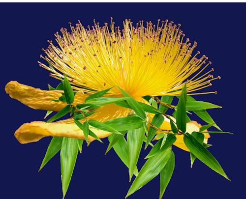 fleurs_paques_tiram_17