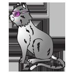 150_cat_shutter_shades