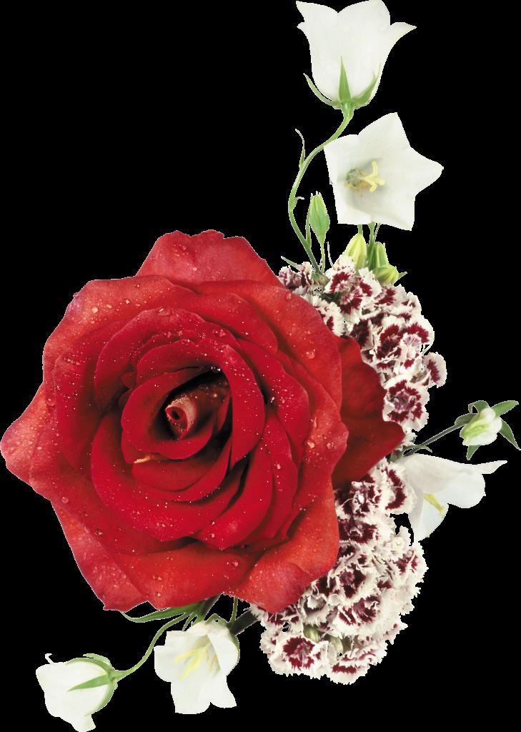 tubes_fleurs_saint_valentin_tiram_235