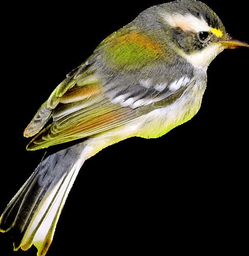 tubes_oiseaux_tiram_9