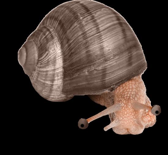 tubes_escargots_tiram_36