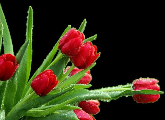 tubes_fleurs_tiram_128