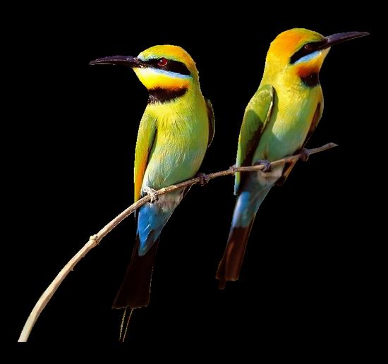 tubes_oiseaux_tiram_178