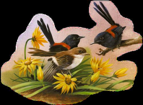 tubes_oiseaux_tiram_186