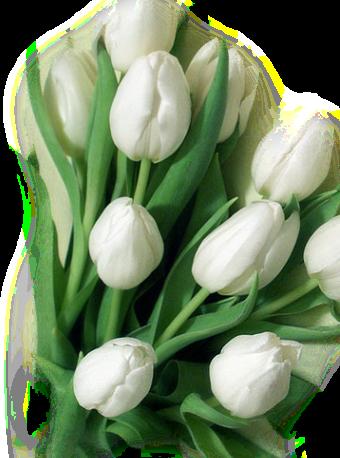 tubes_fleurs_tiram_828