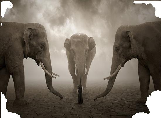 tubes_elephants_tiram_83