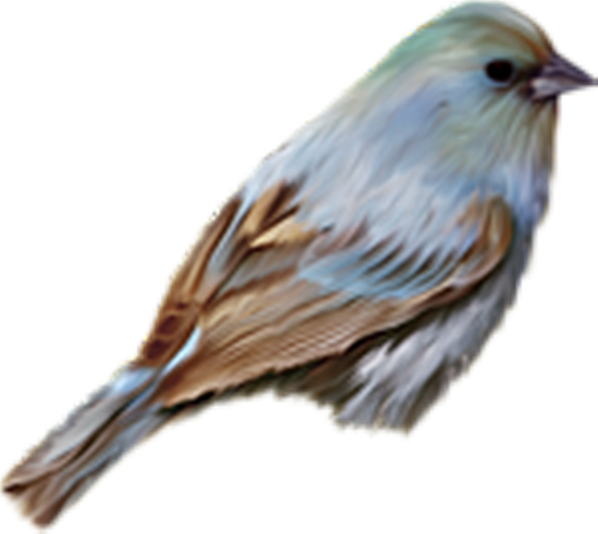 tubes_oiseaux_tiram_63