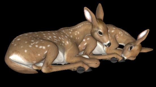 animaux-noel-tiram-67