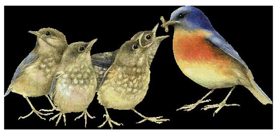 tubes_oiseaux_tiram_102