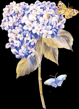 tubes_fleurs_tiram_776