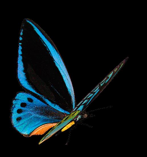 tubes_papillon_tiram_791