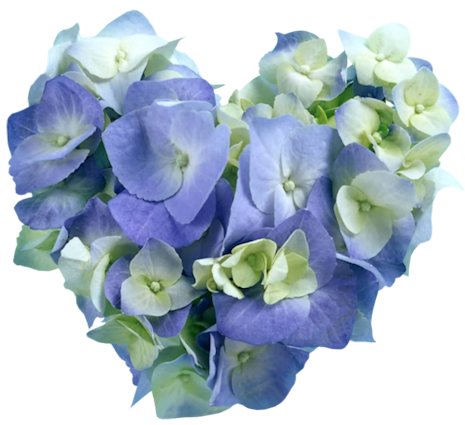 tubes_fleurs_saint_valentin_tiram_10