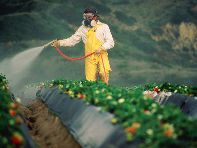 Experts have told, what danger is covered in pesticides