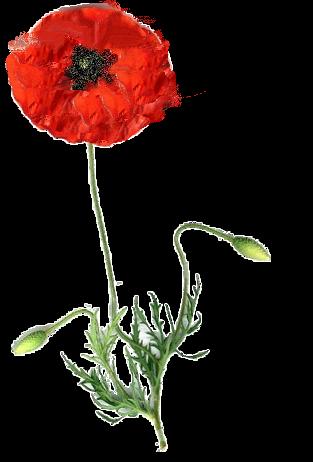 tubes_fleurs_tiram_933