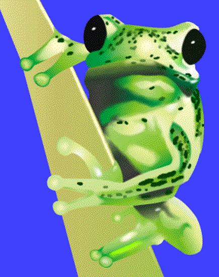 grenouille_tiram_53