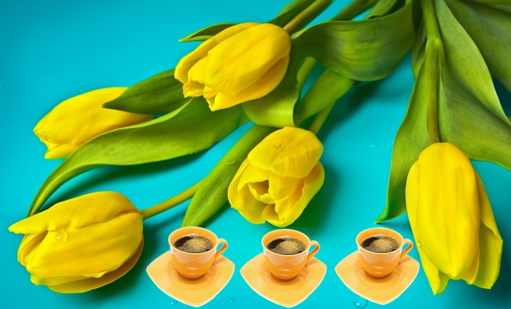 beautiful_yellow_tulips_wallpaper_1920x1200_zpsjkpdhxeq