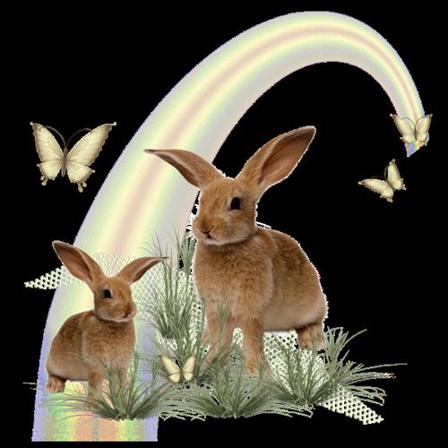 lapins_paques_tiram_374