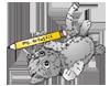 100_kitten