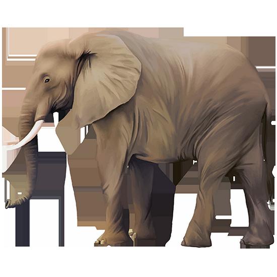 tubes_elephants_tiram_202