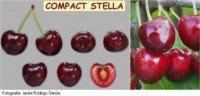 Tipos de cereza: Stella