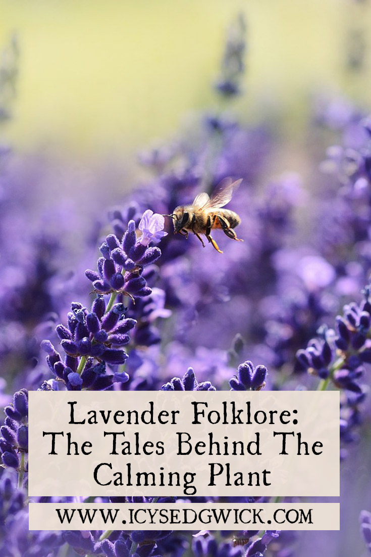 Lavender is a popular plant, with a range of medicinal uses. But what are the legends and folklore behind this calming purple plant? Click here to find out.