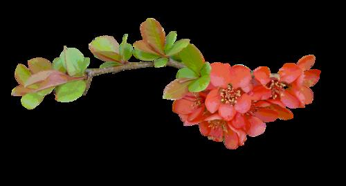 fleurs_paques_tiram_187