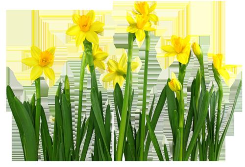 fleurs_paques_tiram_2