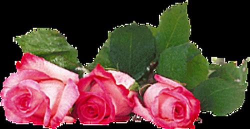 tubes_fleurs_saint_valentin_tiram_26
