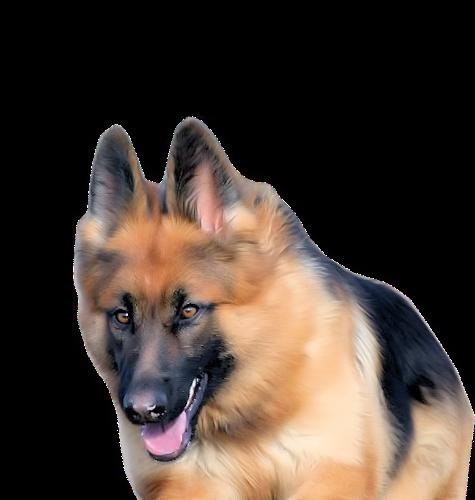 chien_tiram_434