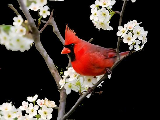 tubes_oiseaux_tiram_42