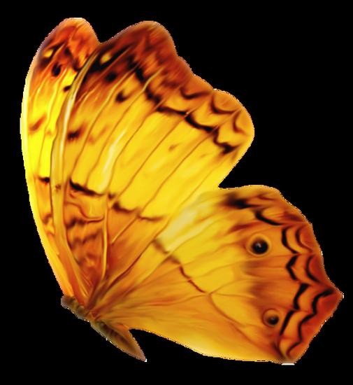 tubes_papillon_tiram_278