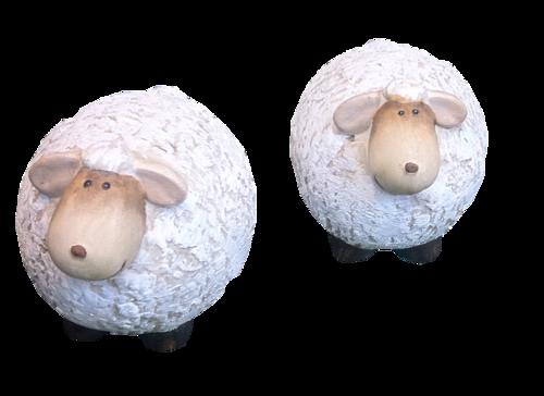 mouton_tiram_7