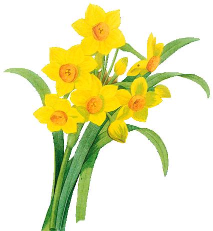tubes_fleurs_tiram_620