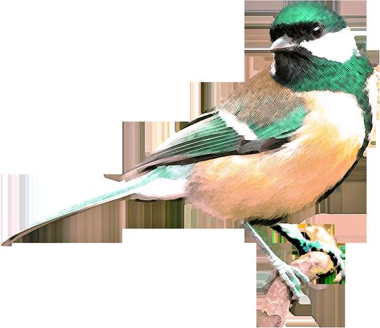 tubes_oiseaux_tiram_125