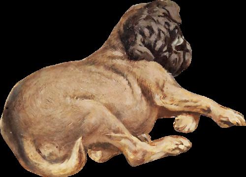 chien_tiram_238